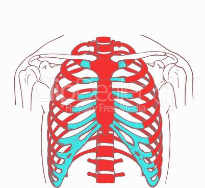 Brustkorb eines Menschen