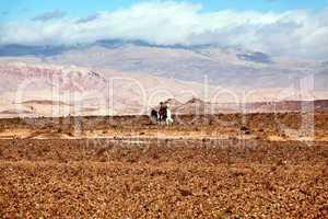 Marokko Landschaft mit Atlasgebirge 812