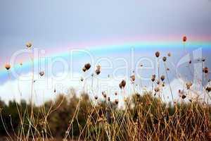 Regenbogen 216