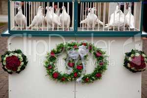 Weisse Tauben im Kaefig 595