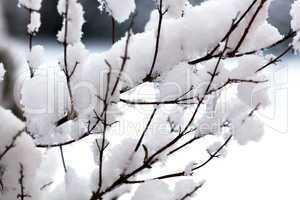 Eingeschneite Zweige 201