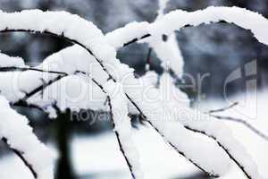 Eingeschneite Zweige 202