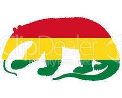 Ameisenbär Bolivien