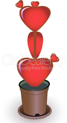 Heart a cactus
