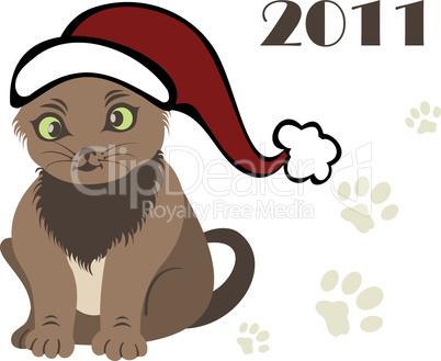 new year 2011 Cat