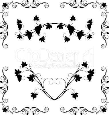 Illustration the grape twig ornate