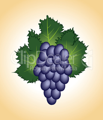 clous-up purple grape isolated