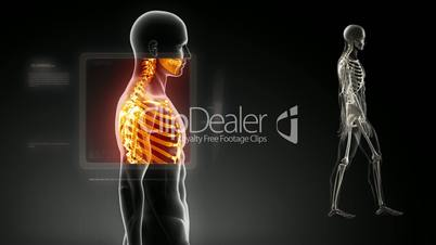 Good posture concept – x-ray spine scan