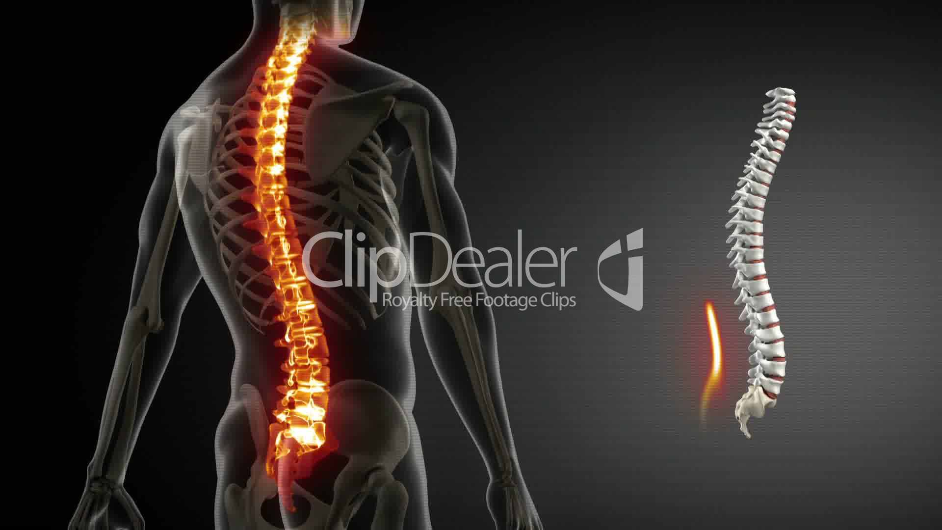 Spine anatomy medical scan: Royalty-free video and stock footage