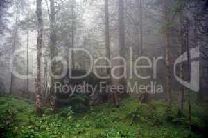 Unheimlicher Wald