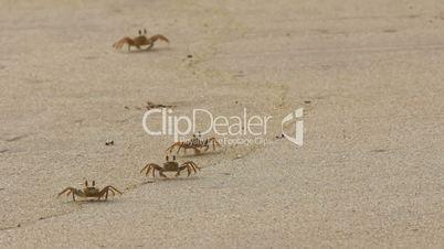 crab at sand
