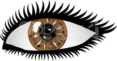 Auge Pupille braun
