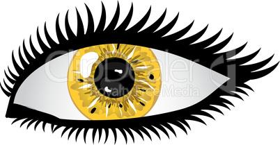 Auge Pupille gelb