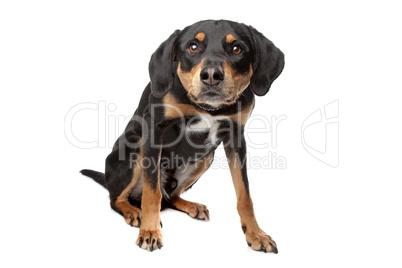 Kleiner Schwarz Braun Weißer Hund Royalty Free Images Photos And