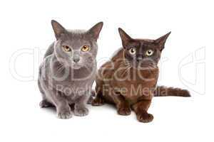 Katzen grau und braun schwarz
