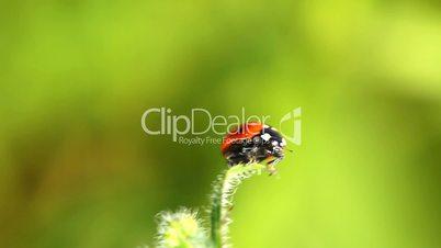 ladybug on green grass