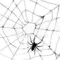 Grunge web spider