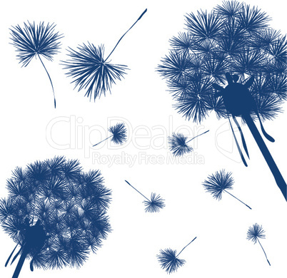 Dandelion card.eps