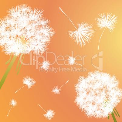 dandelions.eps