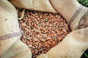 Cacao Beans in a Bag