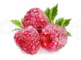 Raspberry - 3 Raspberries
