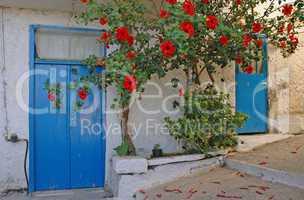 Hibiskus an einem Haus in Kritsa, Kreta