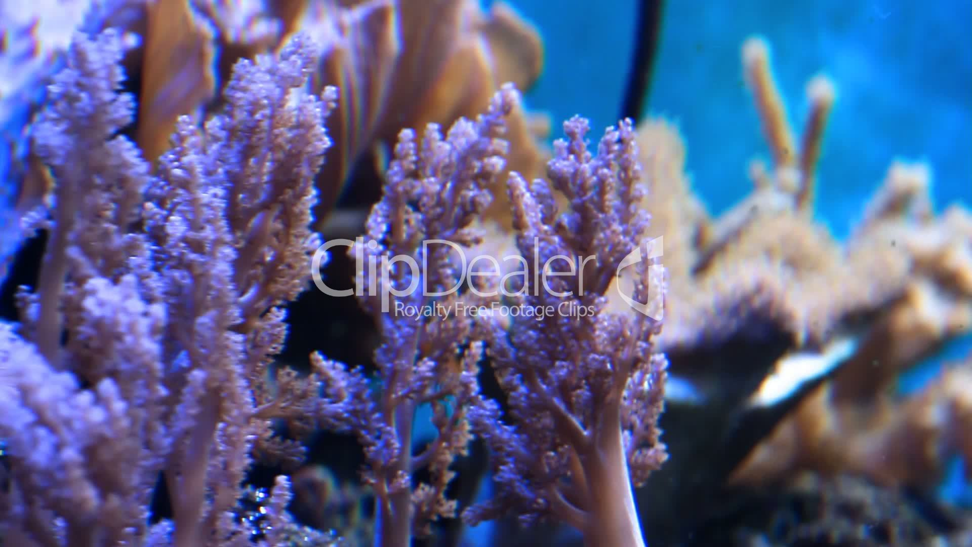 Underwater Plants Lizenzfreie Stock Videos Und Clips