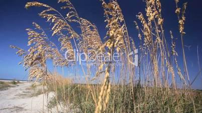 Wild Coastal Grasses
