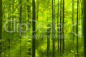 Green forest in springtime