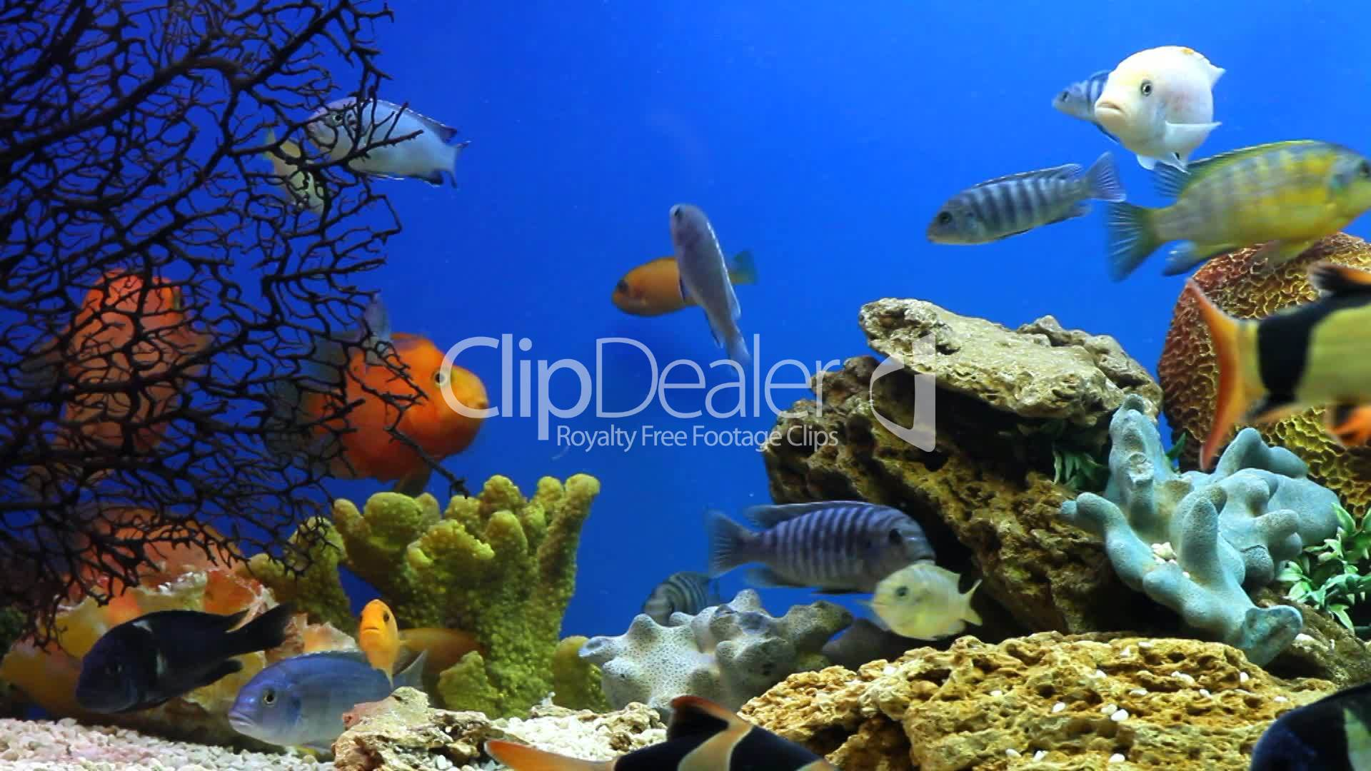 Aquarium Fish Royalty Free Video And Stock Footage