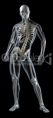 Full Human Body Medical Scan