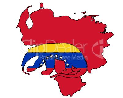 Ameisenbär Venezuela
