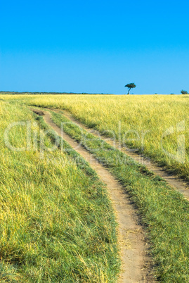 countryside road, green grass and blue sky