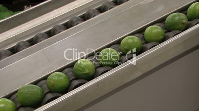 lime fruit on conveyer belt