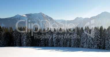 Winterliche Alpenlandschaft mit schneebedeckten Tannen