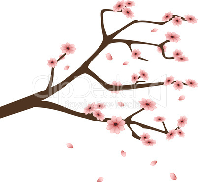 Twig with almond blossom
