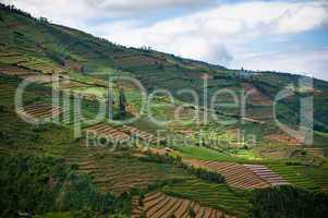 Terraced fields of Dieng plateau, Java, Indonesia