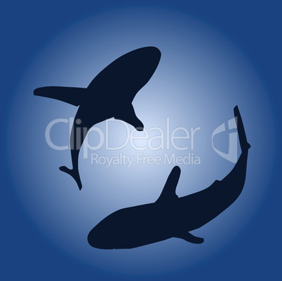 Two sharks
