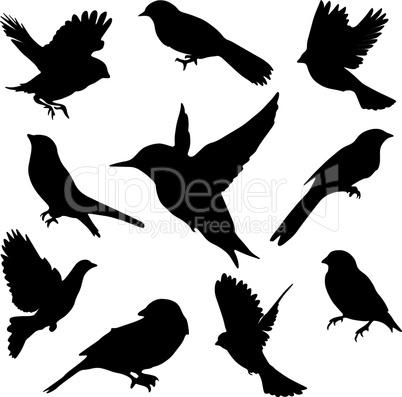 Set Birds.Vector