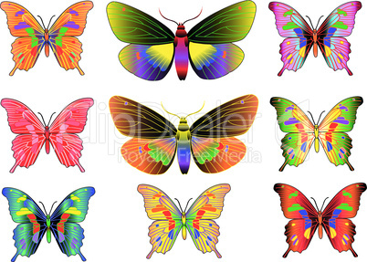 set of different multicolored butterflies