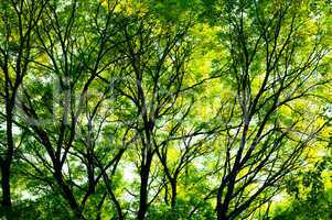 Sunlight through the trees