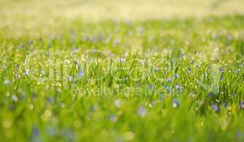 Morgentau auf Frühlingswiese