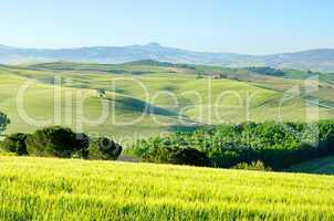 Toskana Huegel  - Tuscany hills 55