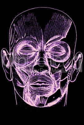 Gesicht/ face