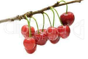 twig sweet cherries
