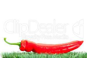 Red pepper on grass