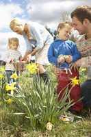 Family On Easter Egg Hunt In Daffodil Field