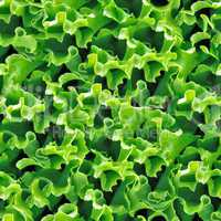Green lettuce seamless background.