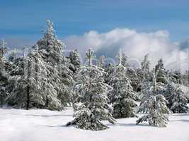 Wintry forest