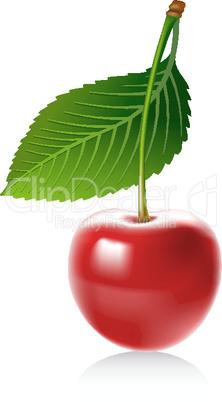 Cherry_vector.eps